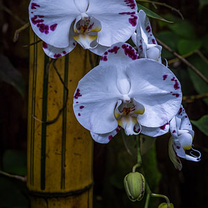 Breathtakingly beautiful orchids from Hawaii