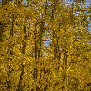 Fall in the Eastern Sierra, California