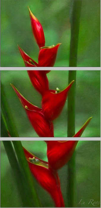Firebird Flower