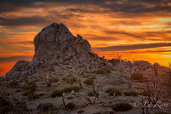 Mojave National Preserve, California