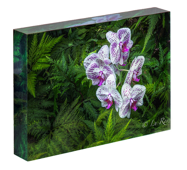 Orchid Acrylic Block